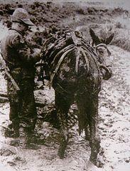 L'alpino e il suo mulo